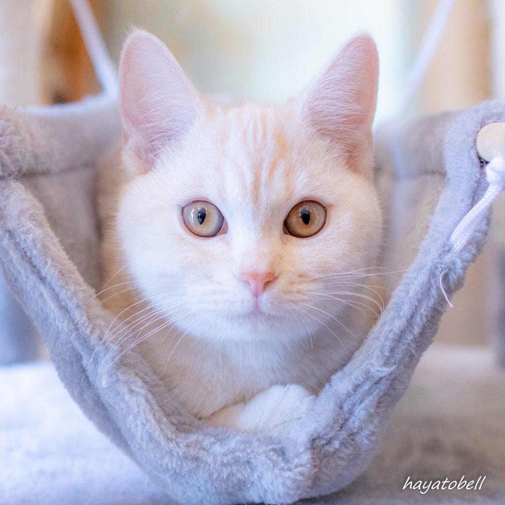 猫 サファリパーク