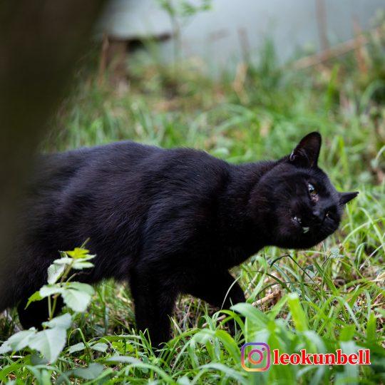 黒猫 へんがお練習中