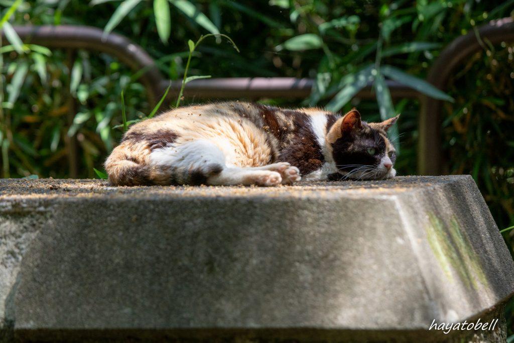 生田緑地の猫