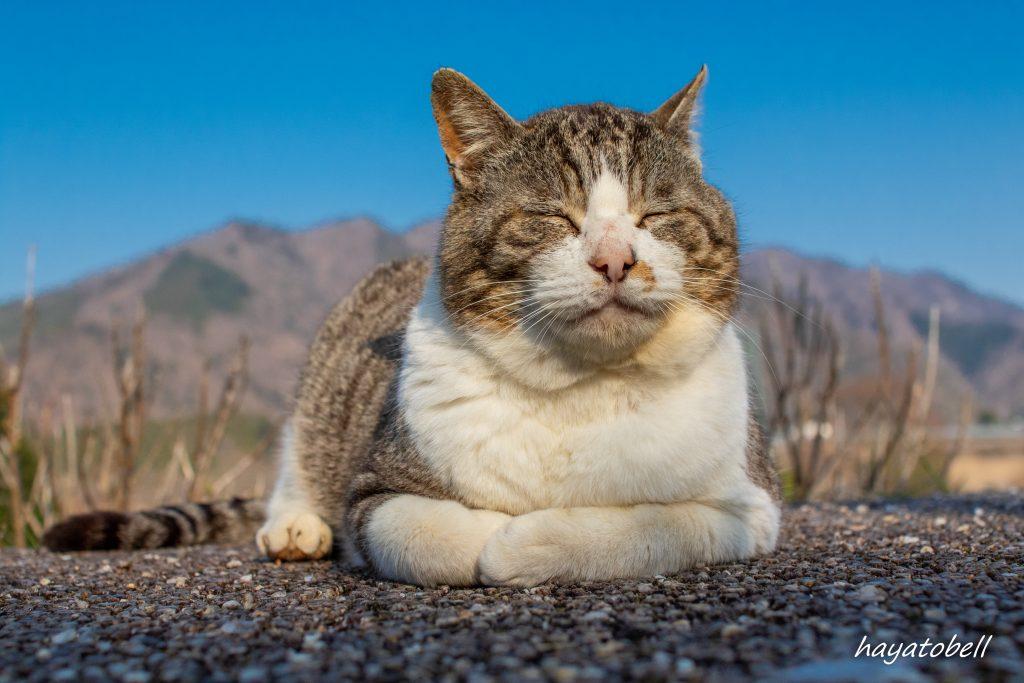 【猫で学ぶ】子ども写真のレタッチで、青空を青く見せる方法