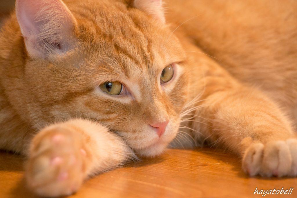 【猫で学ぶ】子ども写真レタッチは、ママの頭の中を再現する!?