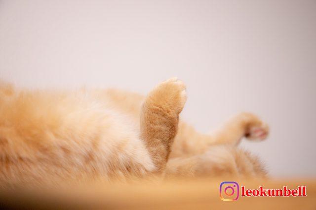 猫 レオ 足