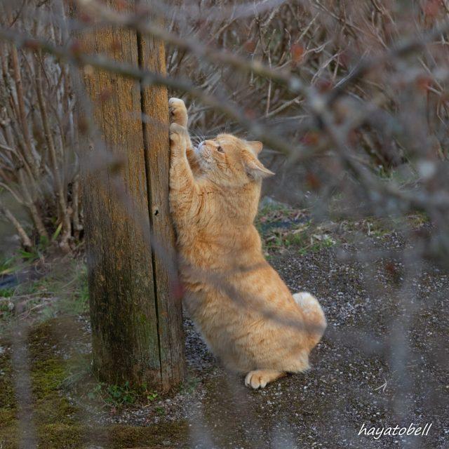 猫 ネイルケア