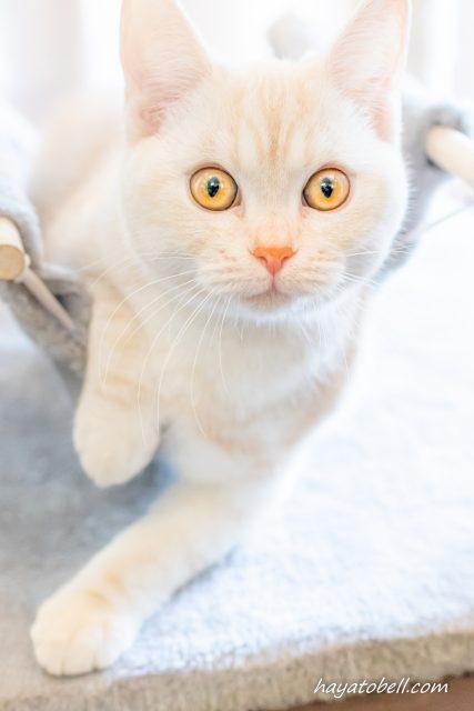 猫カフェ 富士サファリパーク