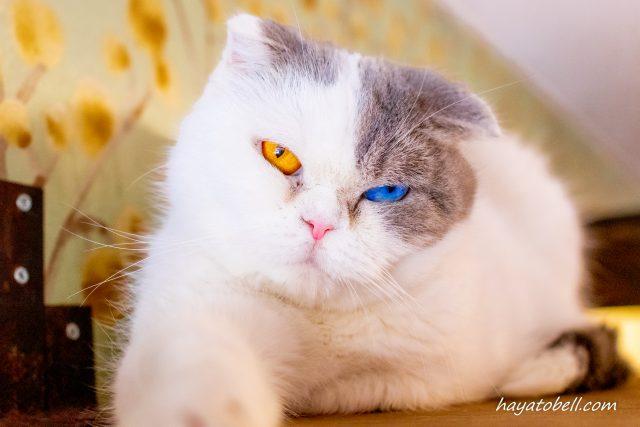 猫の館 富士サファリパーク