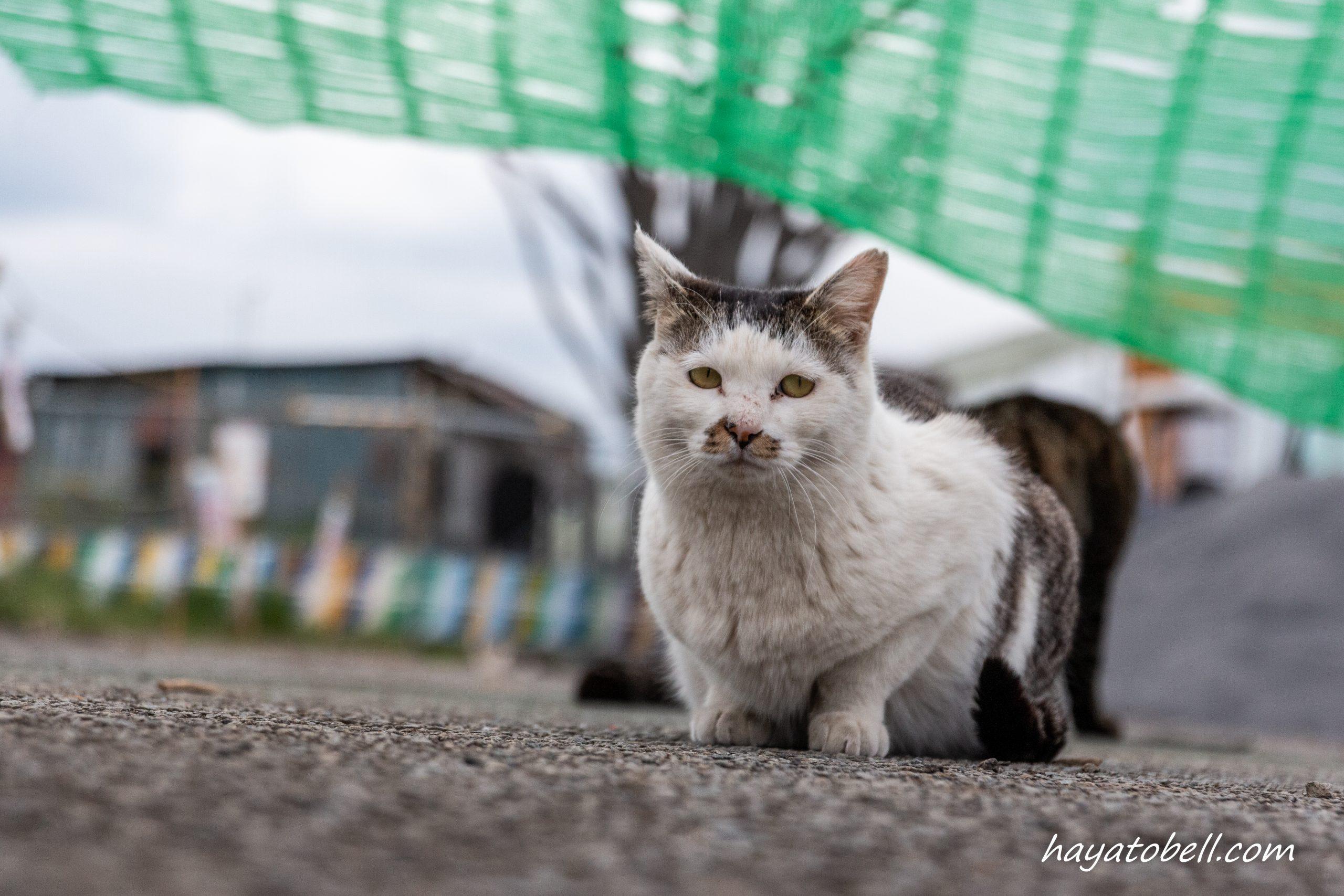 猫 多摩川