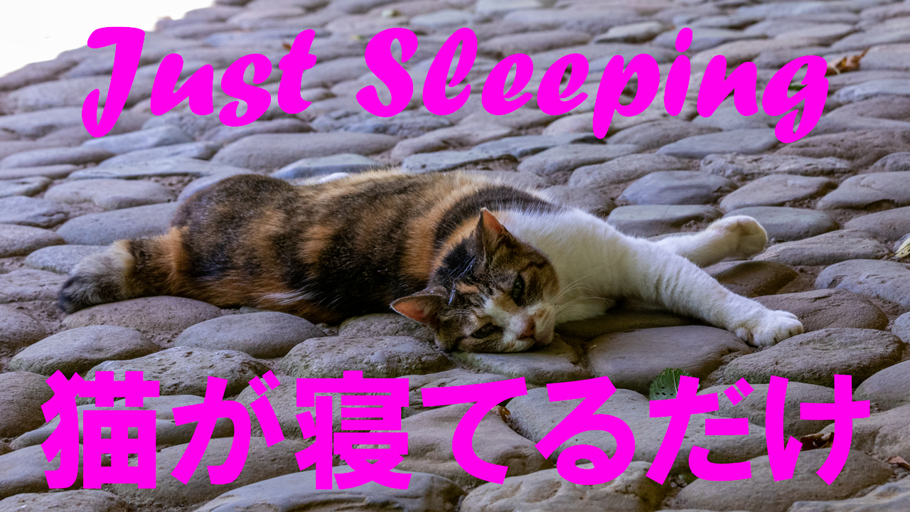 Cat is just sleeping