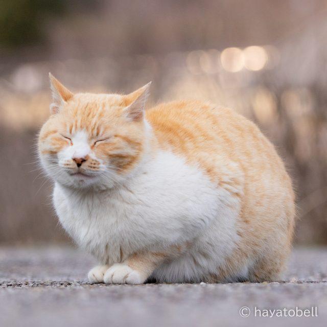 猫 宮ケ瀬