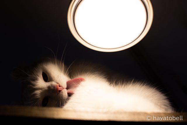 猫 富士サファリパーク