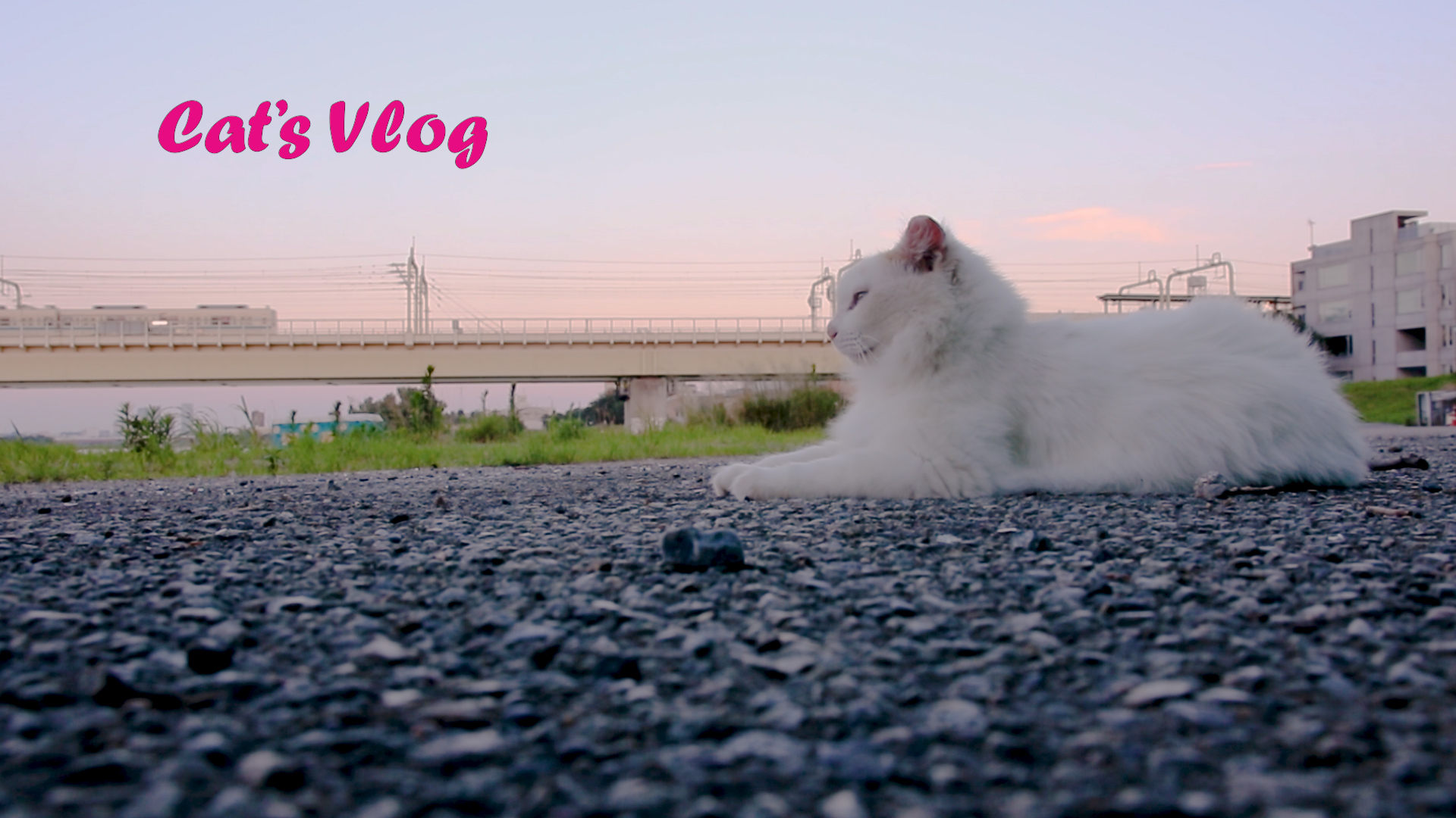 Stray cats' VLOG