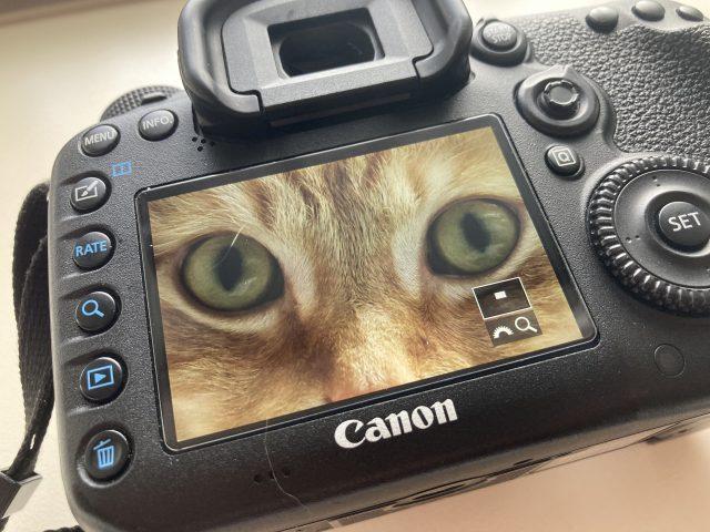 カメラ 画像を拡大して確認